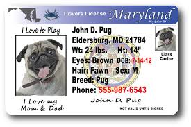 Maryland Drivers License Drivers Maryland License Drivers Maryland
