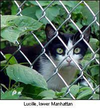 how to keep cats out of the garden. Keep Cats Out Of Garden With: Coffee Grounds, Citrus Peels, Lavender Oil, How To The