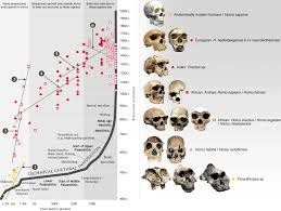 big questions in human evolution as stephen oppenheimer states rapidly increasing brain size was