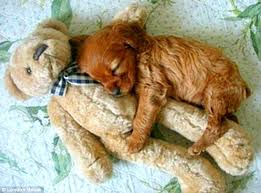cute baby puppies sleeping. Perfect Puppies 51615  Cutest Sleeping Puppies5 With Cute Baby Puppies E