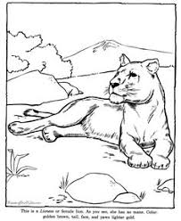 Small Picture Alligator drawing and coloring page animals coloring pages
