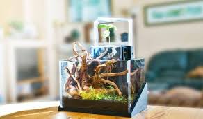 office desk aquarium. ecoqube aquatic ecosystem office desk aquarium n
