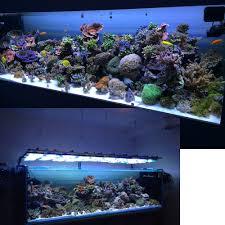 acropora reef tank with aquaray led aquarium lighting