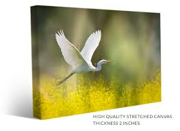 a stretched birds canvas print with the picture of a white heron flying over yellow wildflowers