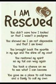 animal rescue quotes and sayings. Exellent And Helping Displaced Animals Find Forever Homes Throughout Animal Rescue Quotes And Sayings E