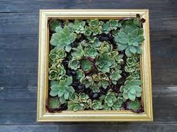 Succulent Garden Designs New 48 Succulent Planting Ideas With Tutorials Succulent Garden Ideas