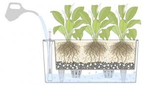 Awesome How Do Self Watering Planters Work?