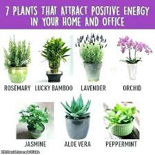 low light plants for office small office plants office plants low light small office plants pleasurable