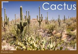 desert plants with names. Brilliant Names This Desert Plant Comes In Many Varieties Like The Hedgehog Cactus Claret  Cup Kingu0027s Pancake Prickly Pear And Mound  Throughout Desert Plants With Names