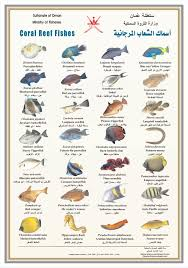 Coral Classification Chart Coral Reef Fishes Poster Chart Salt Water Fish