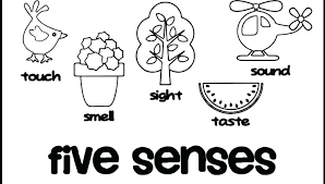 Five Senses Coloring Pages Senses Coloring Pages My Five Preschool