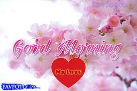 new good morning images with flowers hd
