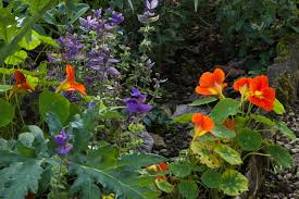 a garden bed with flowers and vegetables
