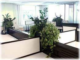 office planter. #plants #landscaping #chicago | Interior Plants Pinterest Plants, And Office Planter E
