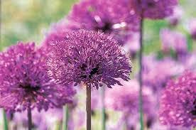 top 10 seed bearing plants flower