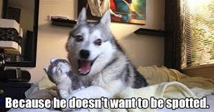 17 Pun Dog Puns That Will Instantly Brighten Your Day via Relatably.com