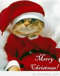 funny cat merry christmas wish