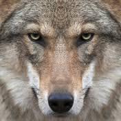 Byron Wolf - YouTube