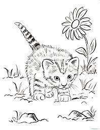 kitten coloring book valid kittenng book pages printable cat 1673127
