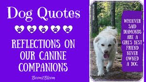 Dog Quotes Reflections On Our Canine Companions Boom2bloomcom