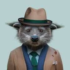 zoo animals in clothes. Beautiful Animals Pictures Facts And Curiosities About Animals In Zoo Animals Clothes N