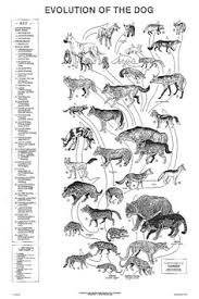 Canine Evolution Chart 159 Best Canine Training Stuff Images In 2019 Dogs Pets