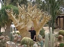 Small Picture 431 best Desert garden plants images on Pinterest Desert