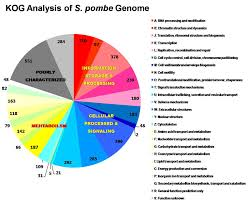 Drug Target Toxicity Identification Services From Bioneer