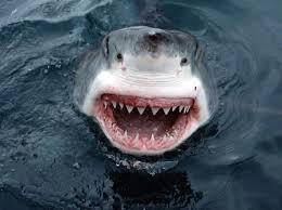 sharp teeth. shark\u0027s sharp teeth!! teeth h