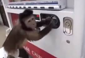 Monkey Vending Machine Cool Here's Video Of A Little Monkey Buying Juice From A Vending Machine