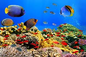 Aquarium Backgrounds 8x12ft Fashion Sea Fish Vinyl Photography Backdrops Aquarium