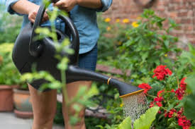 Image result for image of watering can and garden