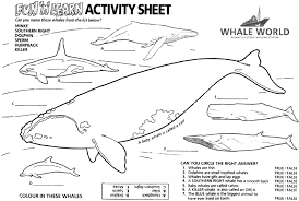 Small Picture Whale Unit Activity Sheets Coloring Sheets Pinterest Whales