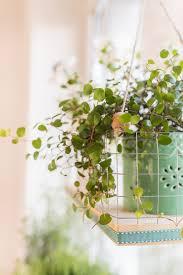 Diy Blumenampel Als Fensterdeko Leelah Loves