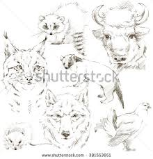 Small Picture Forest Animal Pencil Sketch Set Bison Stock Illustration 381553651
