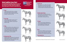 Miniature Horse Weight Chart What You Need To Know Before Rescuing A Horse