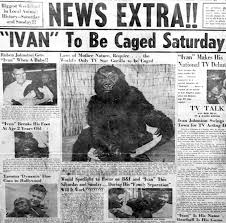The One and Only Ivan vs. the True Story of Ivan the Gorilla