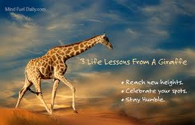 Giraffe Quotes Stunning 48 Life Lessons From A Giraffe Mind Fuel Daily