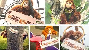 things to do visit the orangutans at dublin