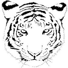 Small Picture Tiger Coloring Pages Polyvore