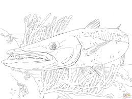 Small Picture Barracuda Fish coloring page Free Printable Coloring Pages