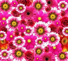 Bildresultat för blommor