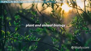 what is biochemistry definition history topics video what is biochemistry definition history topics video lesson transcript study com