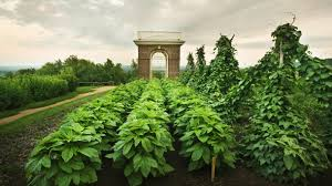 Jefferson The Scientist And Gardener Thomas Jeffersons Monticello