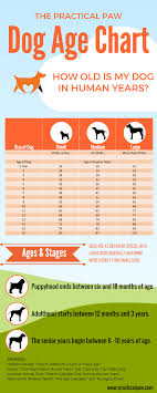 Dog Chart For Age What Age Do Dogs Go Grey Stress Highlights Explained