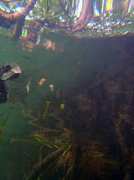 underwater photo essay underwater mangrove