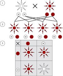Monohybrid Cross Wikipedia
