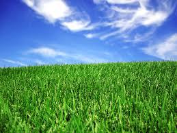 Green Grass Blue Sky Blue Sky And Green Grass Bliss Type Wallpaper