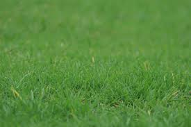 wild grass texture. Free Images : Nature, Growth, Plant, Field, Lawn, Meadow, Prairie, Texture,  Wild, Foliage, Green, Pasture, Fresh, Soil, Flora, Plants, Greenery, Leaves, Wild Grass Texture
