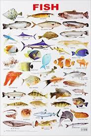 Fish Chart
